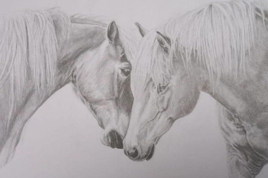 tekening daphne ruw (2)